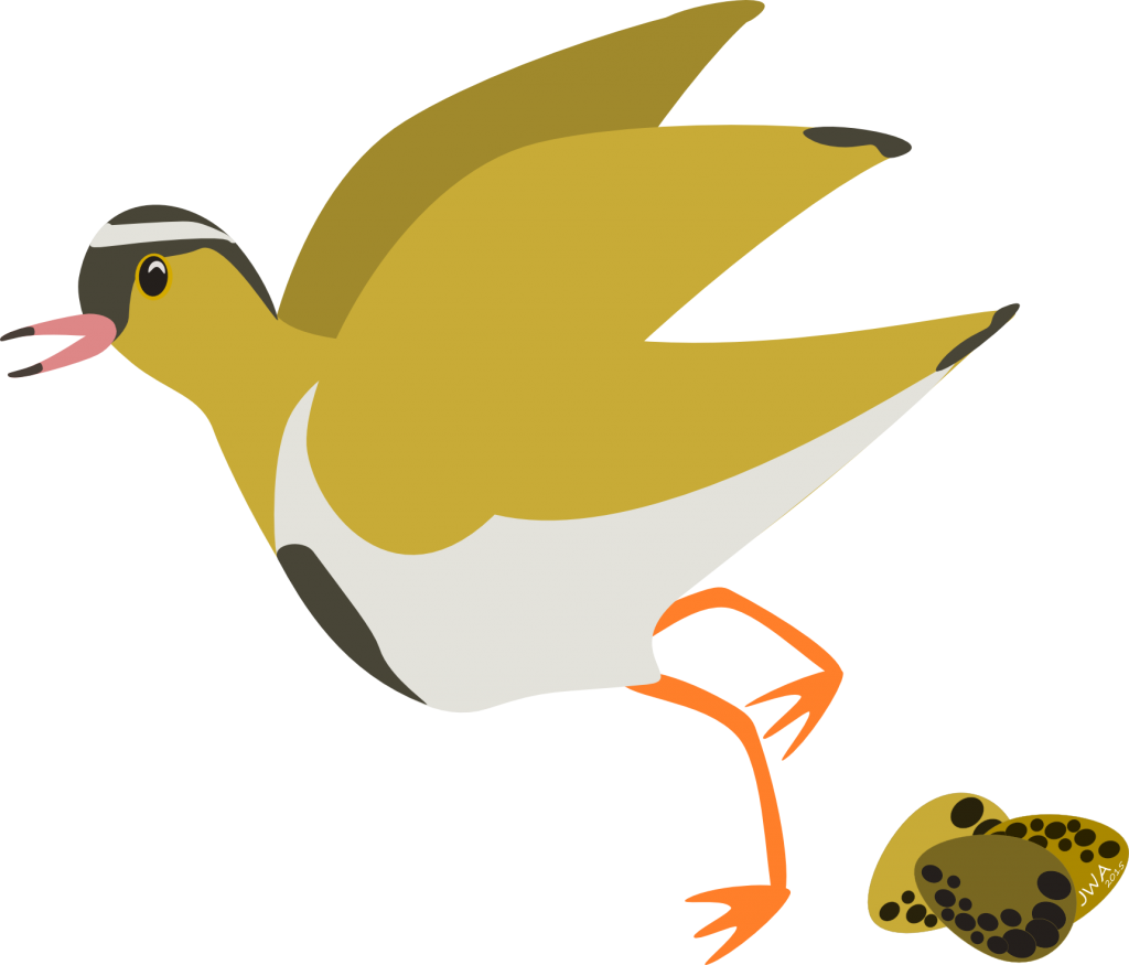 Cartoon_Crowned Plover_3-1