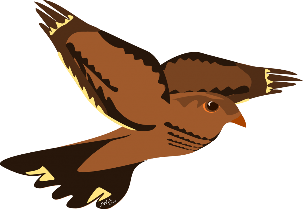 Cartoon_Nightjar_2
