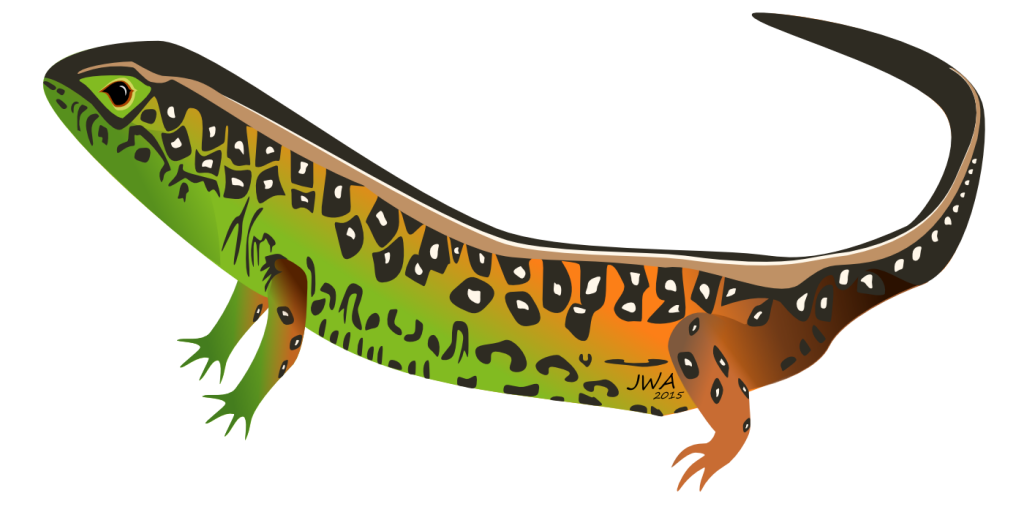 Cartoon_Sand lizard