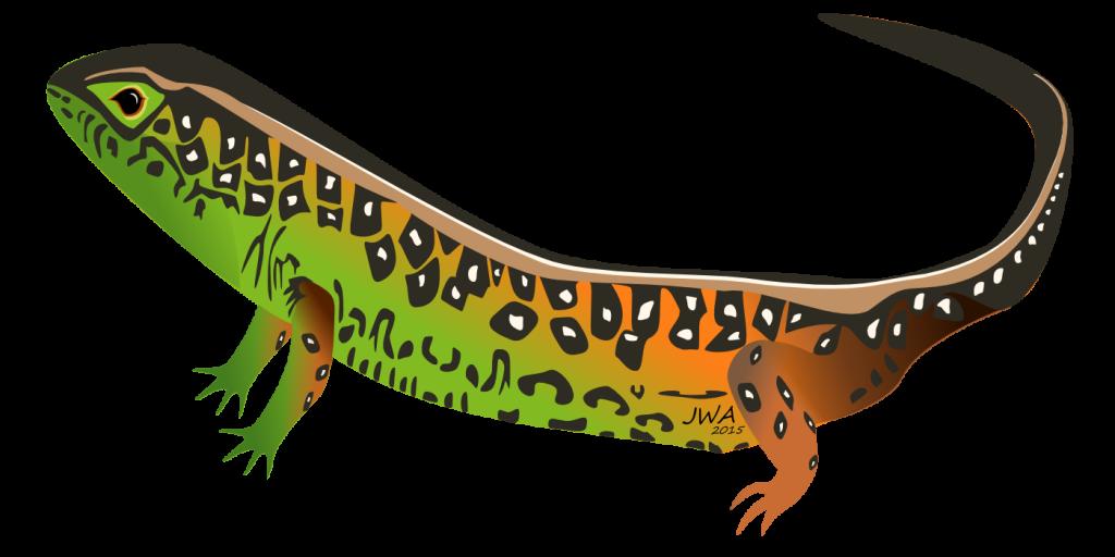 Cartoon_Sand lizard