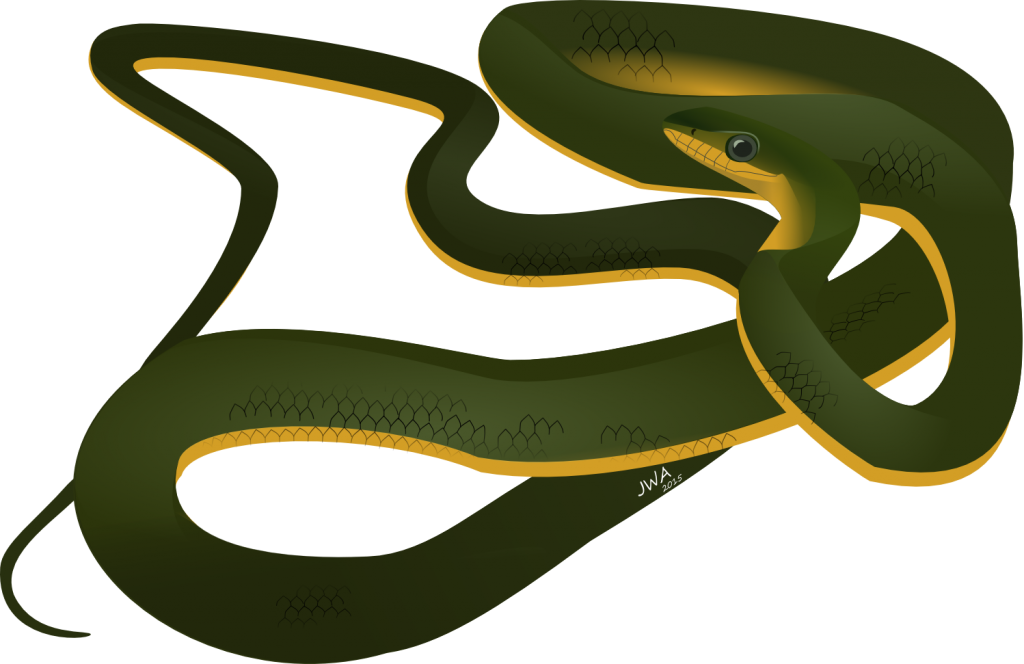 Cartoon_Common Tree Snake
